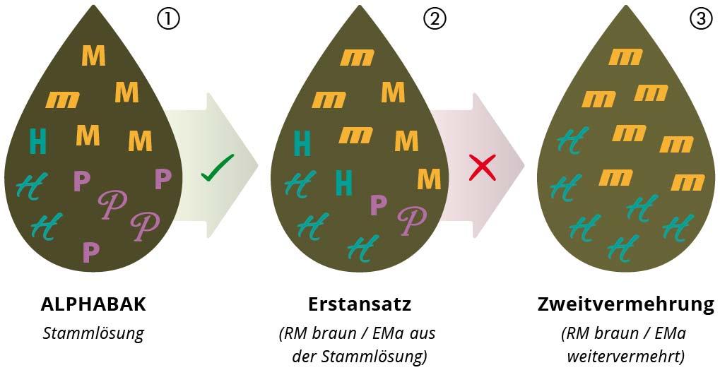Infografik: Effektive Mikroorganismen richtig vermehren; EMa aus der Urlösung selbst herstellen