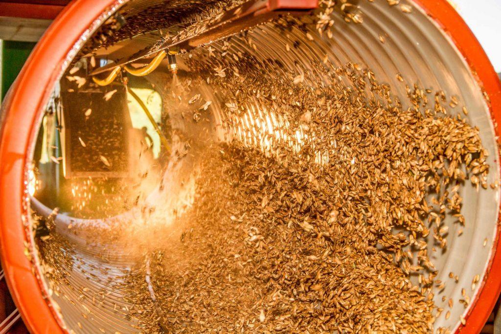 Saatgut wird mit Effektiven Mikroorganismen und Zeolith gebeizt